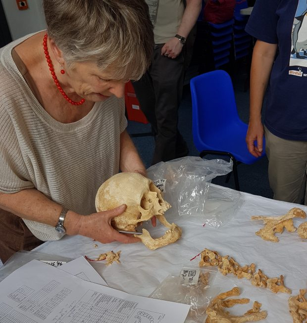 Examining a skull and lower jaw